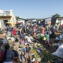photo: Sven Torfinn. Uganda, Fort Portal, Rwenzori province, July 2015. Kabundire Market in Fort Portal, a fast expanding town in the foothills of the Rwenzori mountains. The urbanization attracts more people and creates non-agricultural economic activities. Farmers living around the town are providing food, especially for the low income settlers. Agricultural produce, fruits and vegetables, but also Matoke, or cooking plantain, or bananas, the staple food for most people in Uganda, is brought to town and sold on the markets. Kabundire Market is a farmers market that happens every Monday and Thursday. The market is managed by the division authorities.