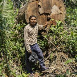 Alle ogen op de Amazone: de toekomst van bosbescherming in Brazilië