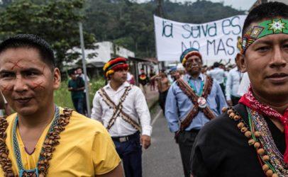 Hivos en Greenpeace ontvangen extra 4 miljoen euro om ontbossing in de Amazone tegen te gaan