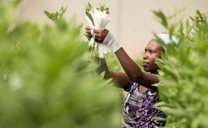 COVID-19: gevolgen voor de harde werkers aan het begin van onze distributieketens