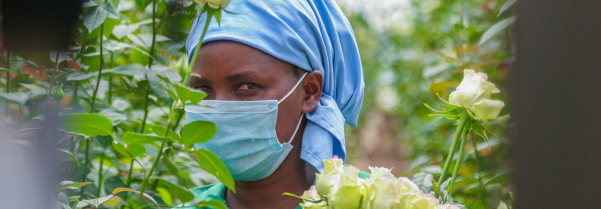 Hivos en True Price lanceren eerlijke roos